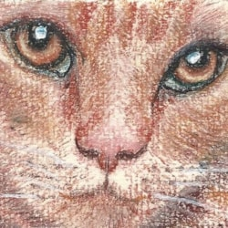 aceo pastel of cats face close up