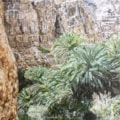 A Wadi in Oman