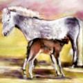 The Dartmoor Foal