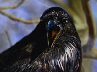 Morning Raven