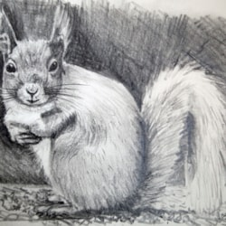 Red Squirrel Study