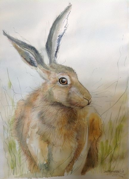 Hare in the grass