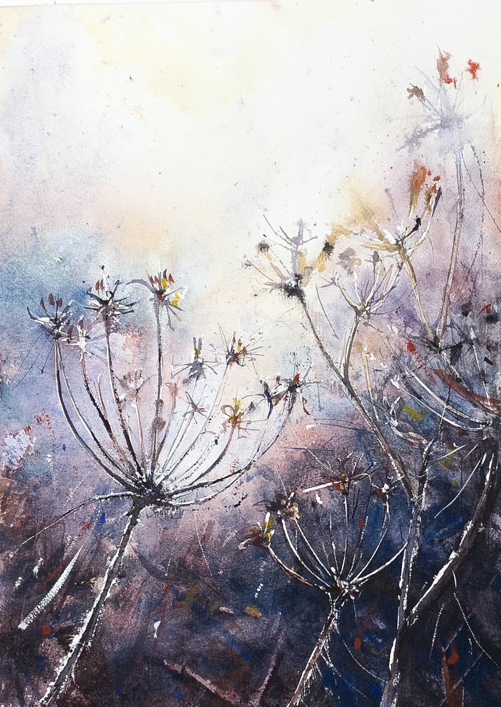 Frosty Fennel Watercolour, from life