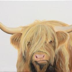 Cumbrian Highland Cow