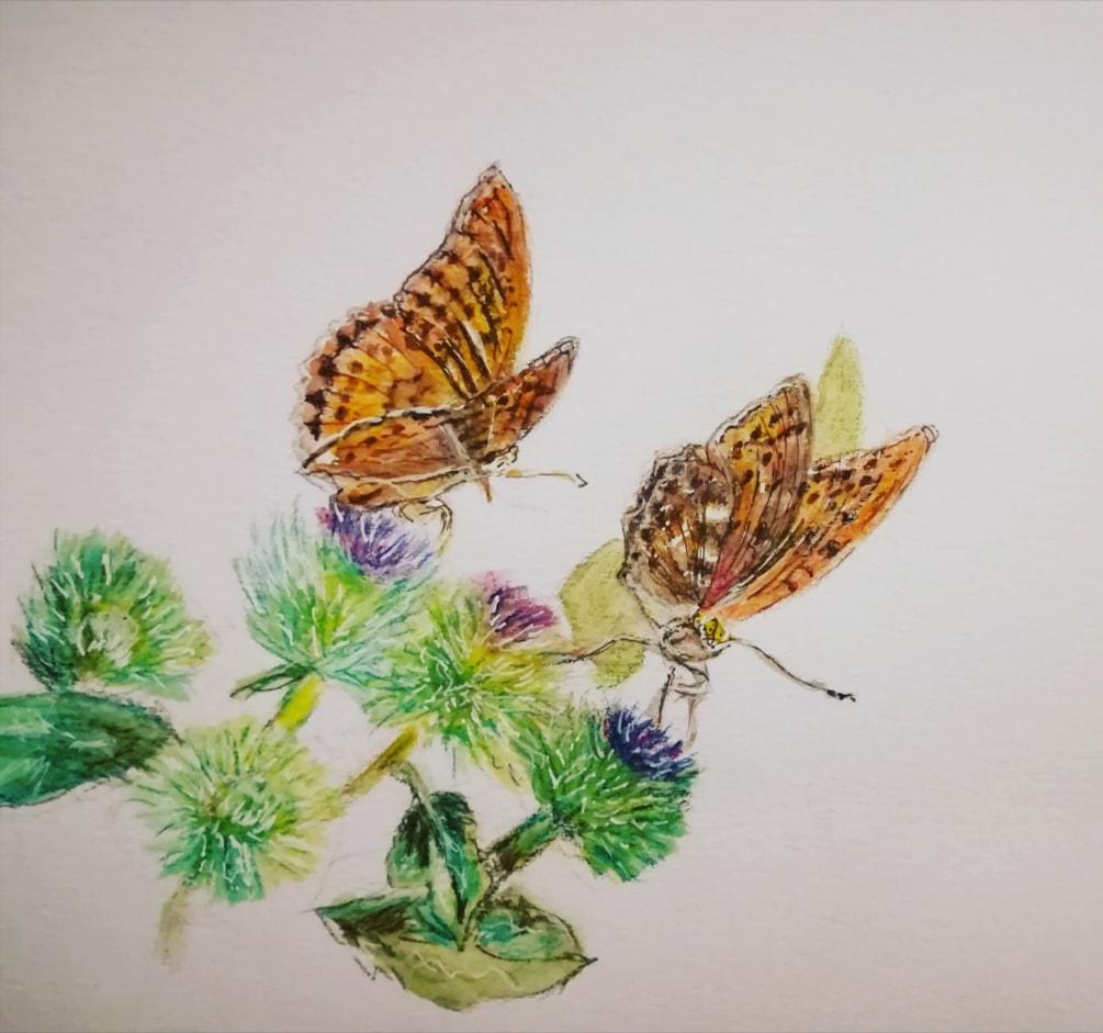 Butterflies on barbs