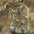 Tigers in Love