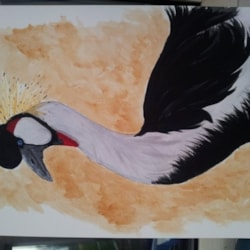 african crowned crane