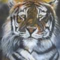 Tiger in Spring