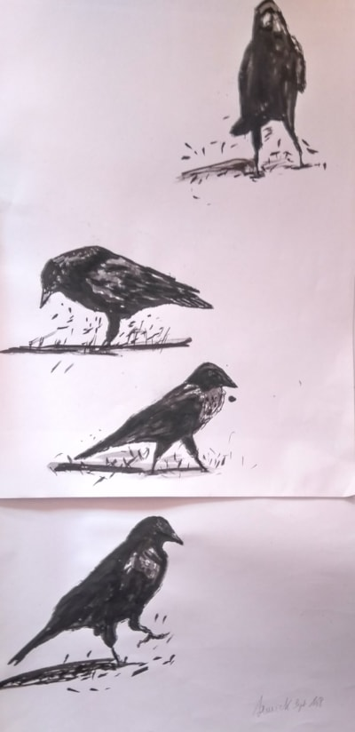 Crows sketches .