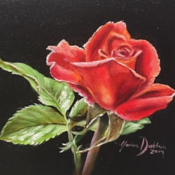 The Valentine's Rose - Oil over Acrylic