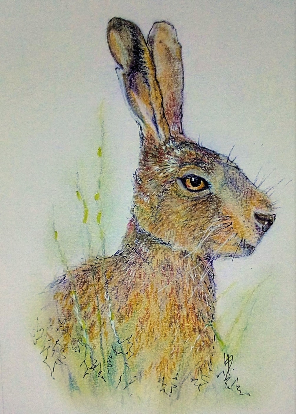 Hare today, gone tomorrow ...
