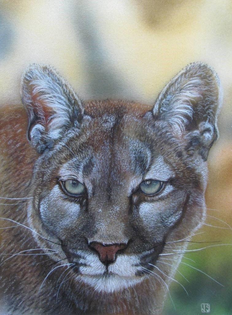 Puma Stare