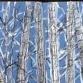 Birch .