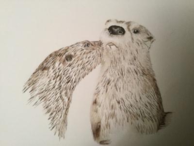 Otter effection