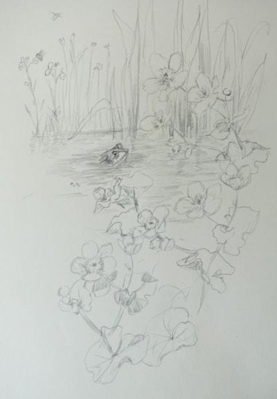 Frog in the marsh marigolds