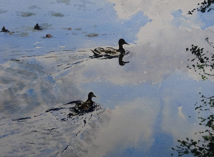 Ducks at Eyeworth Pond in the New Forest