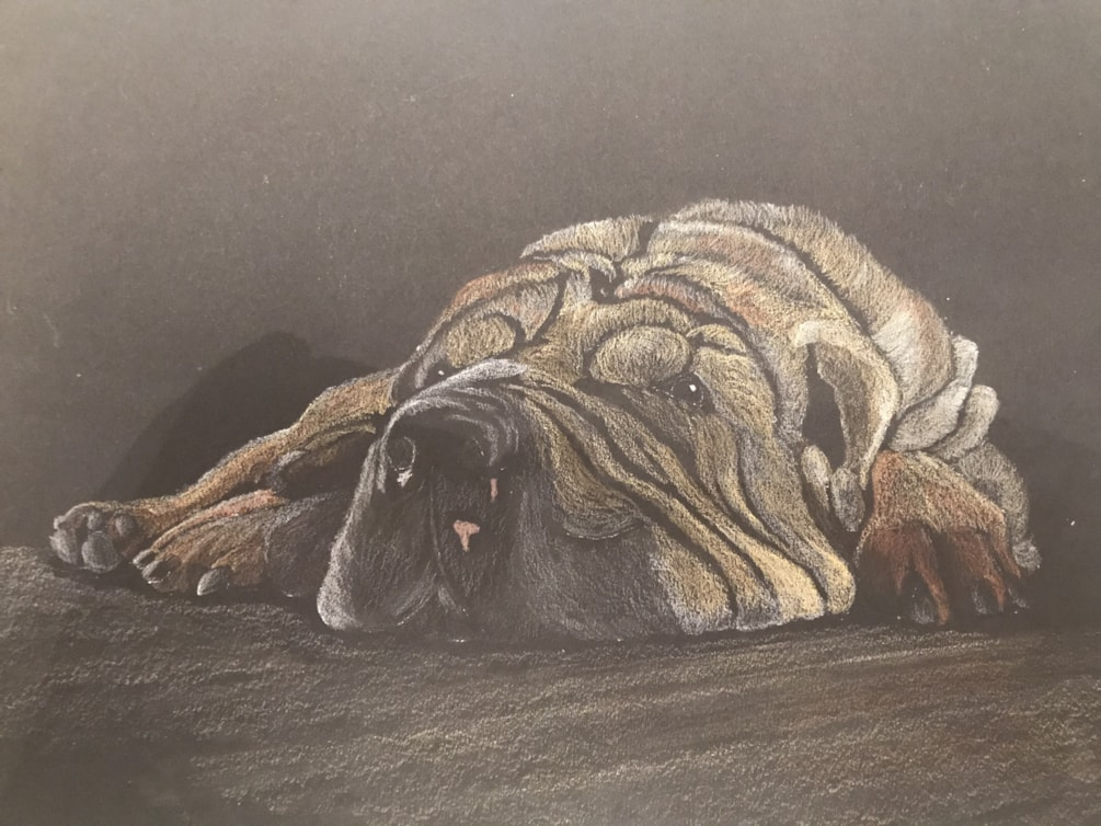 Commission for a Sharpei from local FB page