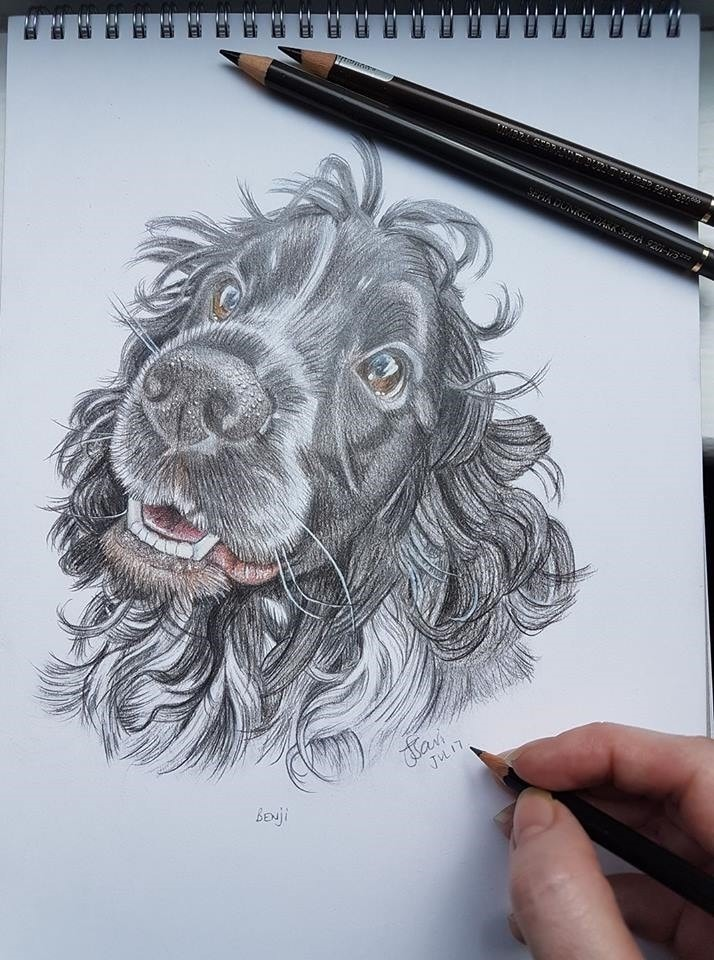 Benji the spaniel - completed in mixed pencil - 2017