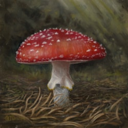 Pine Wood Fly Agaric