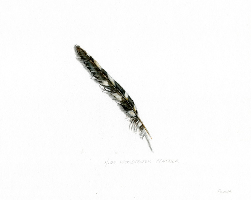 1 woodpecker feather (2)