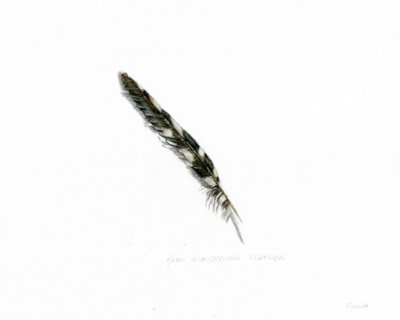 1 woodpecker feather (2)
