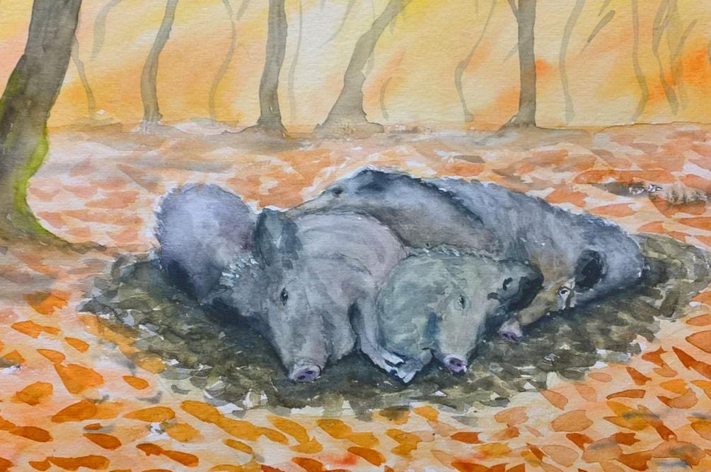 20191116_Wildschweine klein