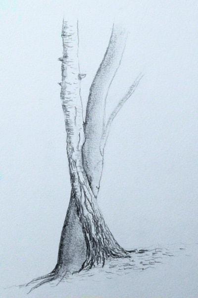 20200112_Zusammengewachsene Bäume 1