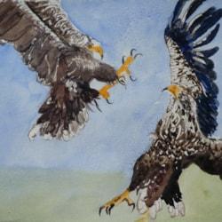 20210422 Birds in flight white tailed sea eagles