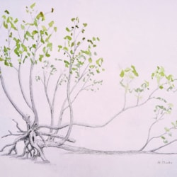 20210428 Neu wurzelnder Baum