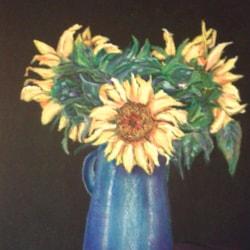 Baddesley Sunflowers