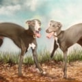 Whippets improved version