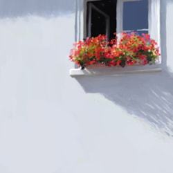 WindowBox, Geraniums