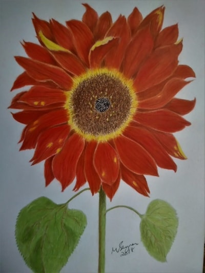 Bronze Sunflower