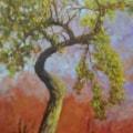 The old apple tree