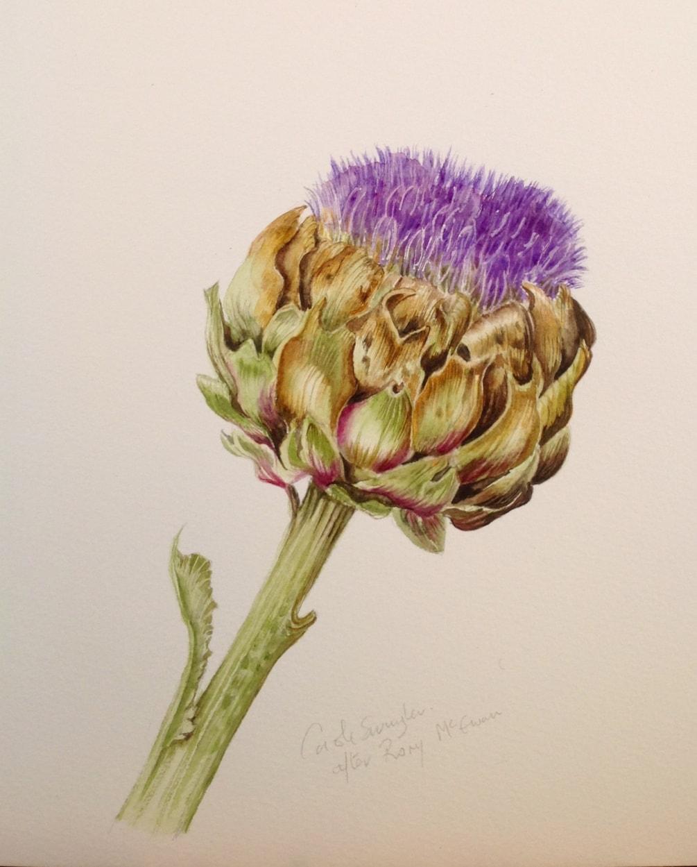 Flowering Artichoke