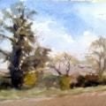 Trees near Welton