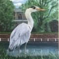 Heron on Carshalton Ponds