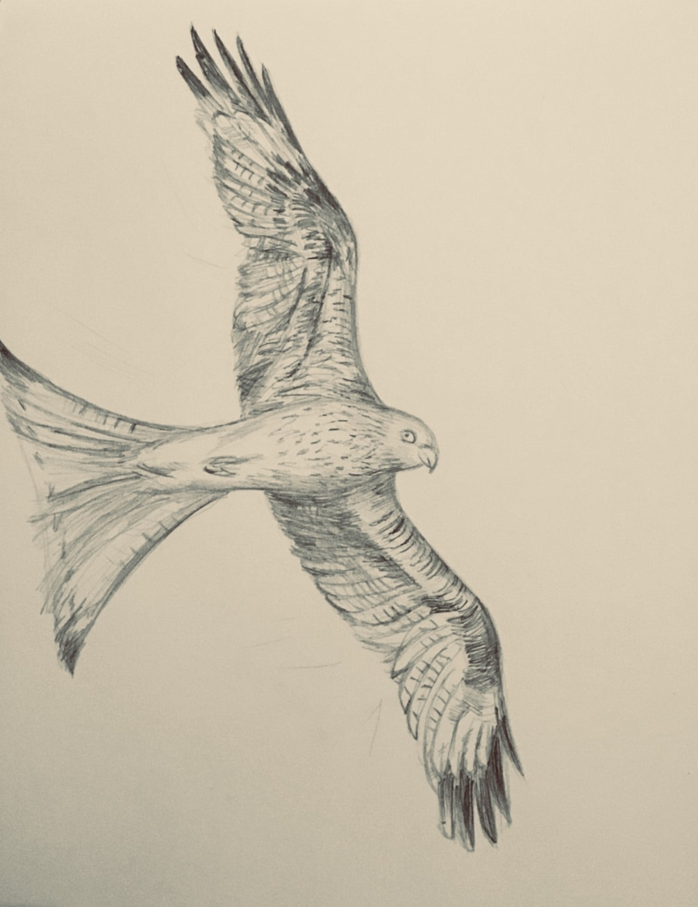 March challenge- The Red Kite