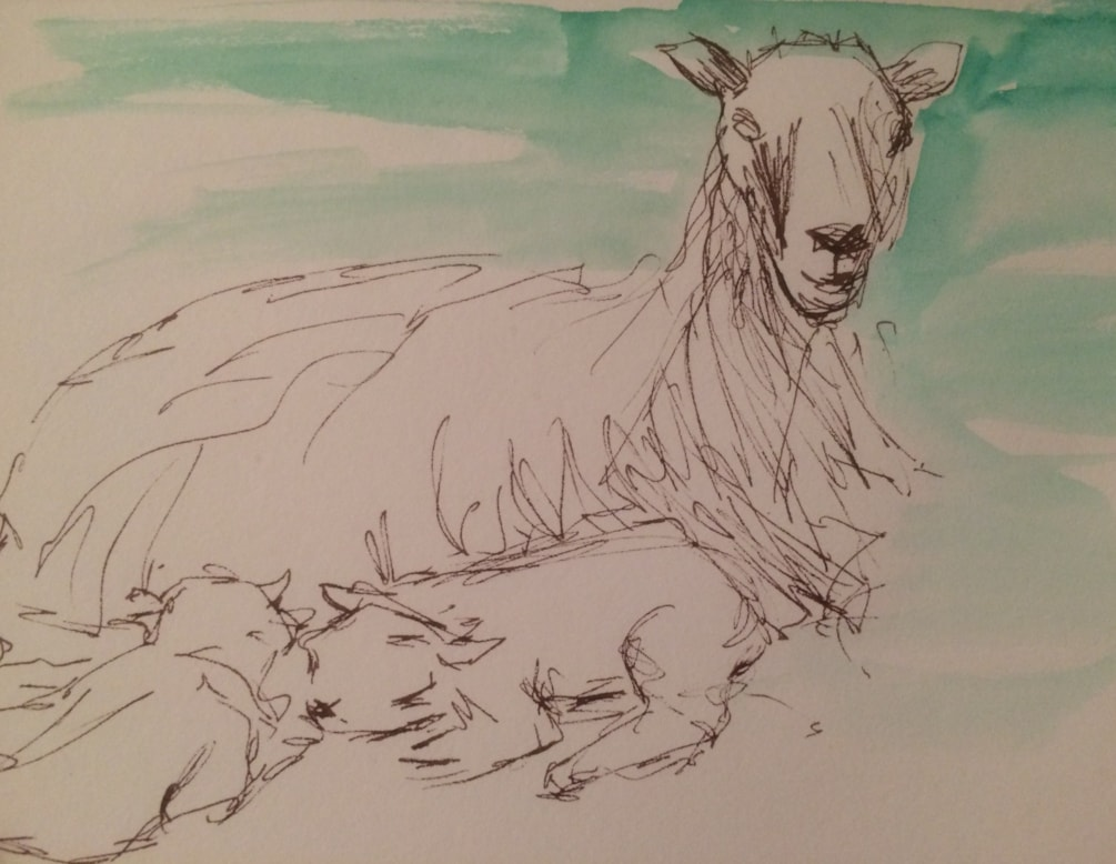 Feeling sheepish-sketch 2