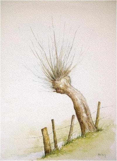 Pollard-willow