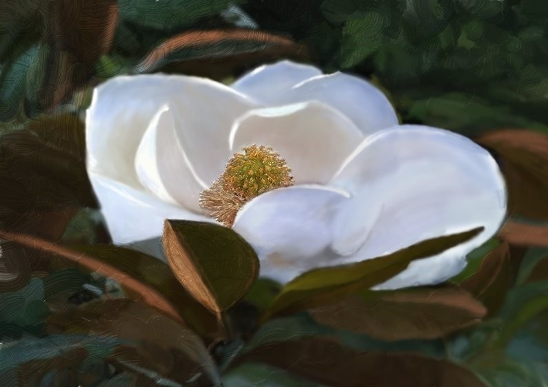 Sweet Magnolia & The Dying Light