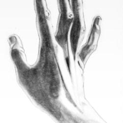 The hand: anatomical study 1