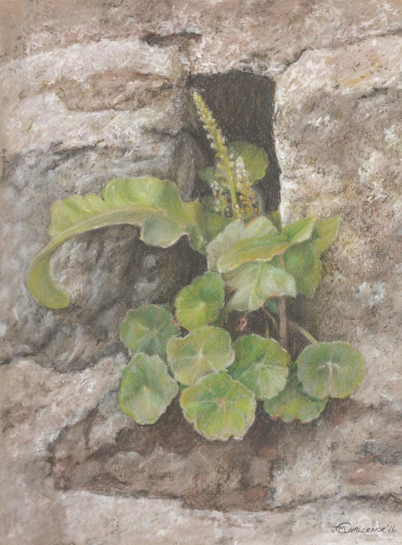'Wall Flower #1'