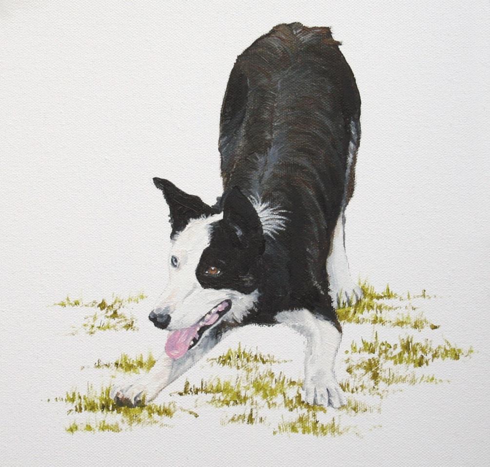 Collie dog