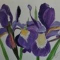 Iris's Iris
