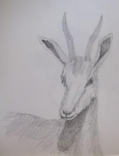 Springbuck head