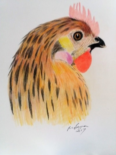 Funky Chicken for Fiona