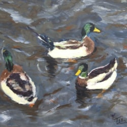 Ducks in rough waters