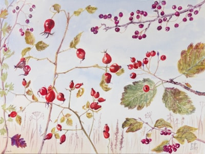Hedgerow fruits, October