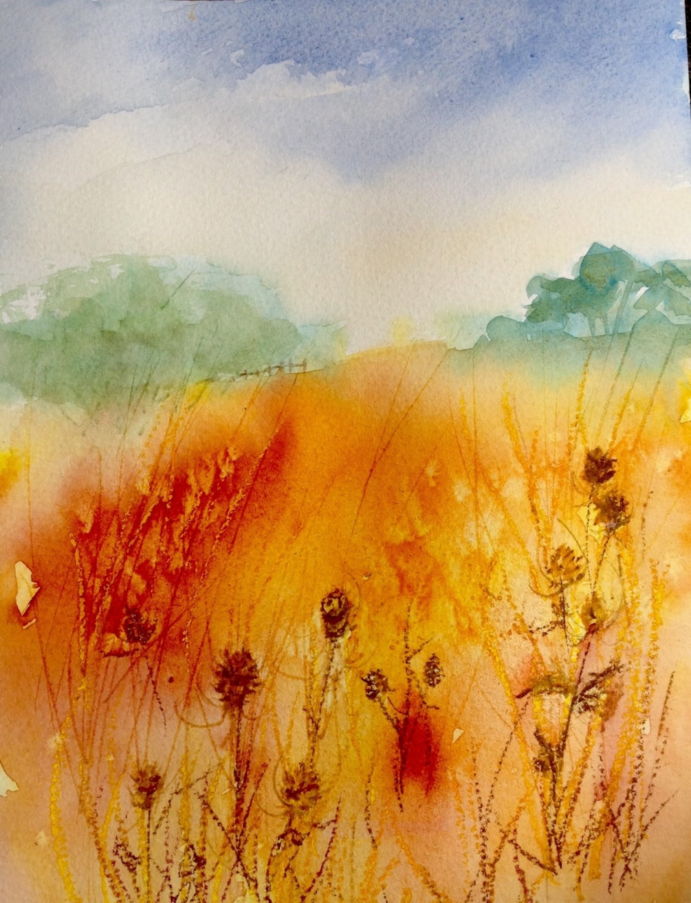 Summer field with teazles and poppies